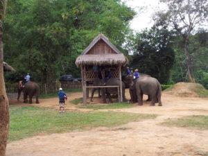 Elephant station