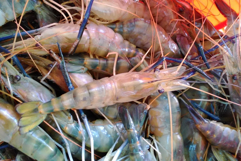 raw blue prawns