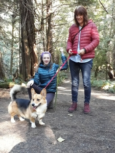 Kebab the Corgi out for a walk with trusted petsitters
