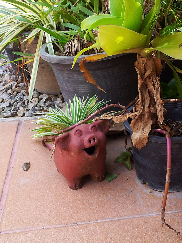 A pig-shaped planter