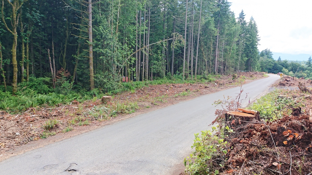 The strip of clearcut