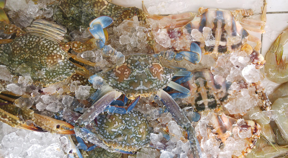 Seafood abstract in blue crab