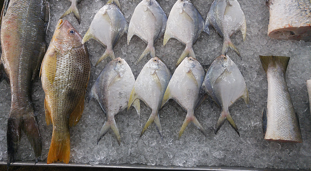 Still-life in dead fish